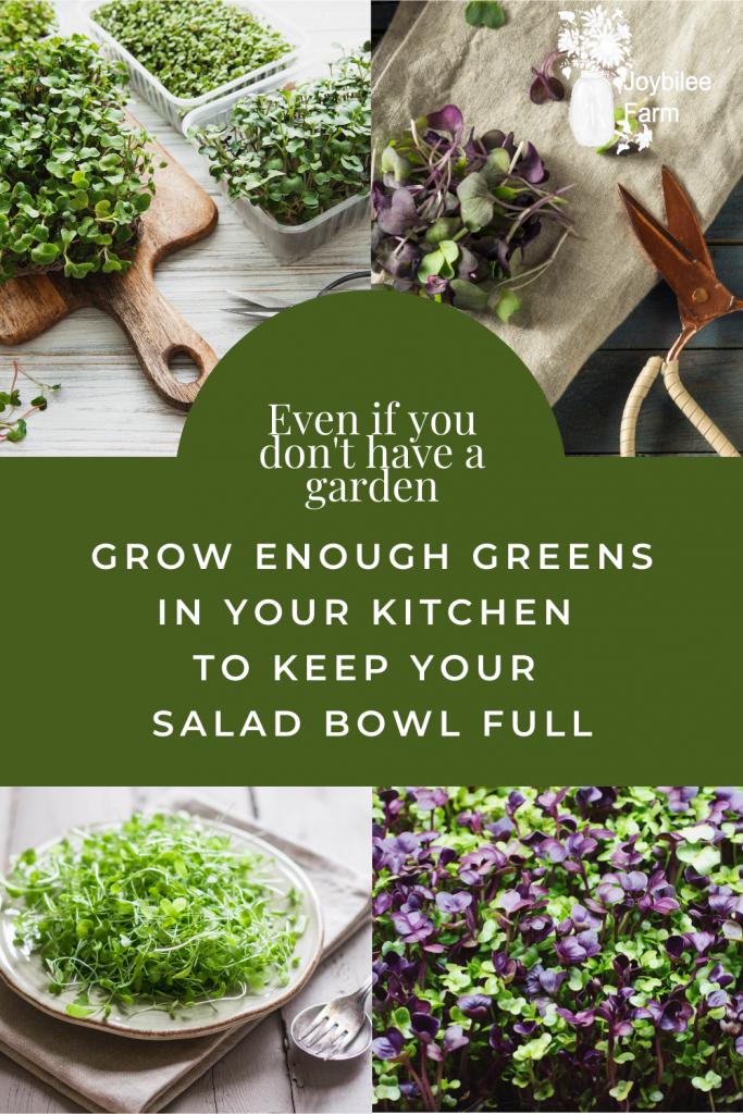 Various colorful microgreens for salad greens