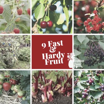 9 Quick Producing Fruit to Grow in Your Edible Garden in  Zone 3