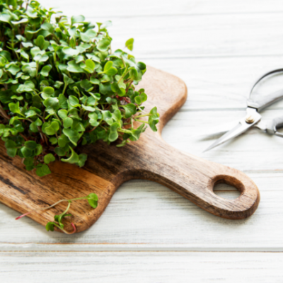 Where to Buy Microgreen Seeds and Which Seed Suppliers to Avoid This Year
