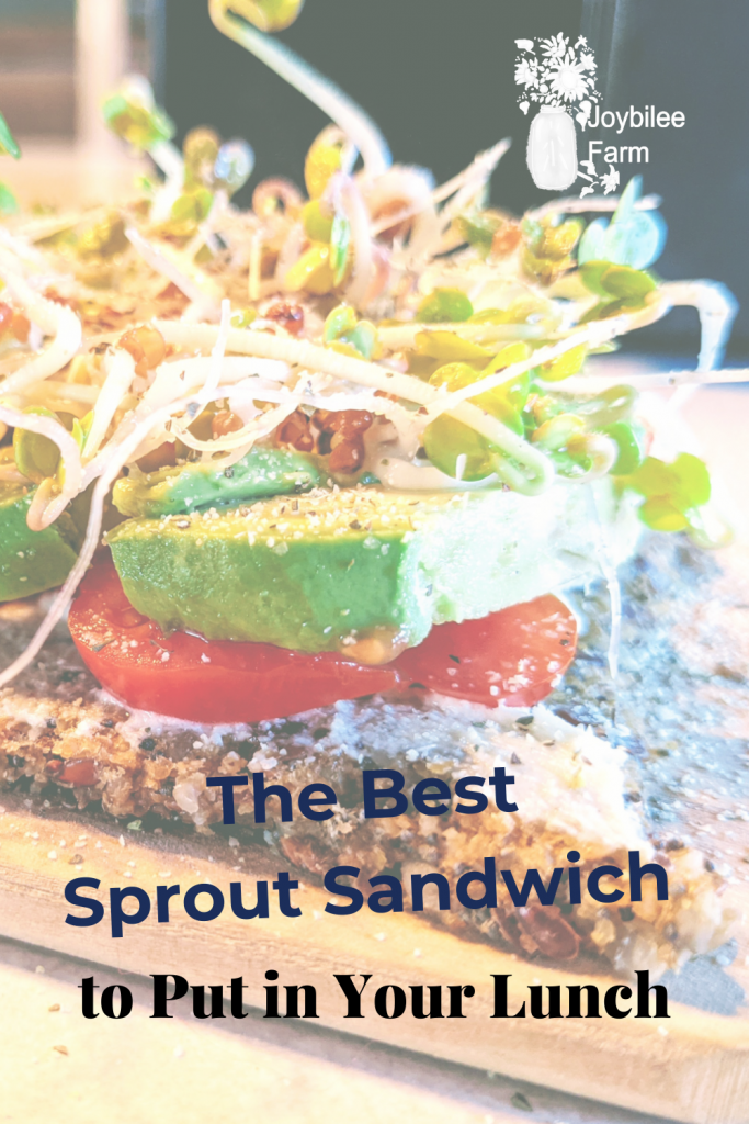Open faced sprout and avocado sandwich