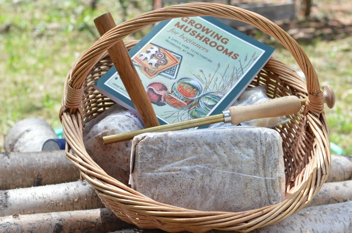 Mushroom spawn and log innoculation tools, along with a handbook for growing mushrooms in a wicker basket