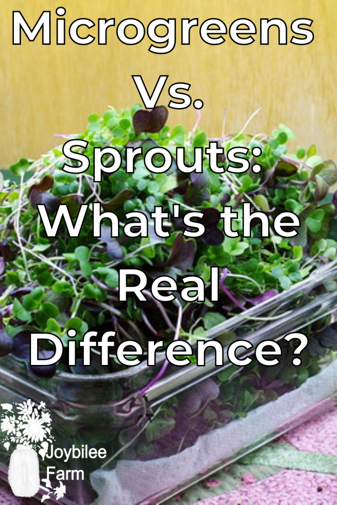 a box of harvested microgreens for the microgreens vs. sprouts taste debate