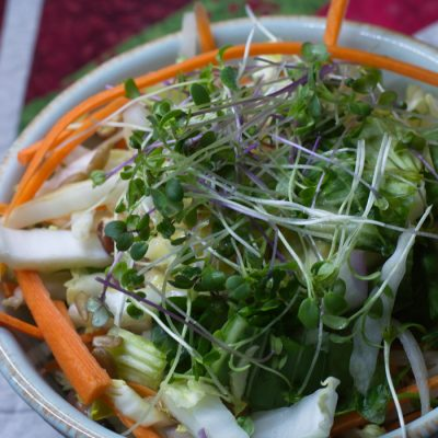 30 Best Microgreen Recipes For Fresh Flavor Year Round