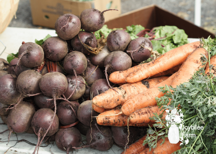 Carrots and beets are not for long term food storage. They're storage time is around 3 to 6 months.
