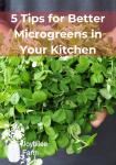 a double handful of green microgreens